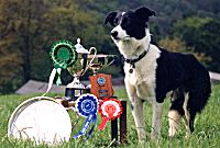 Dog and trophies!